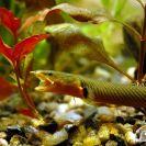 Hadí ryba