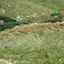 Roháče 2007